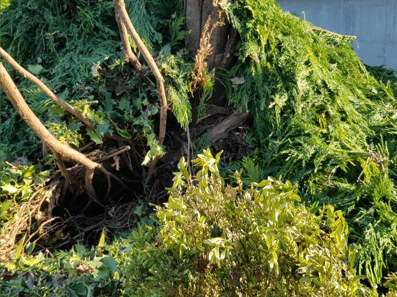 Astwerk, Laub, und Sträucher kompostieren