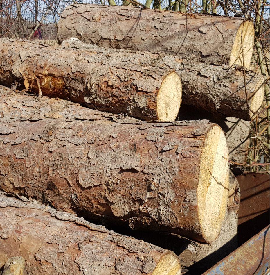Containerpreis für Stammholz anfragen