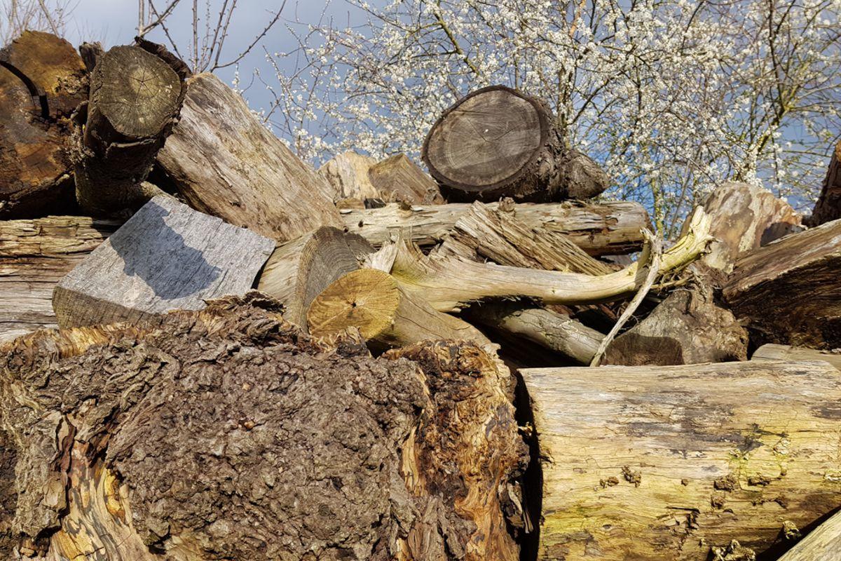 Preise anfragen für Stammholz
