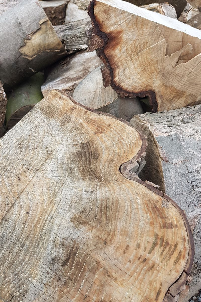 Stammholz aus Hürth
