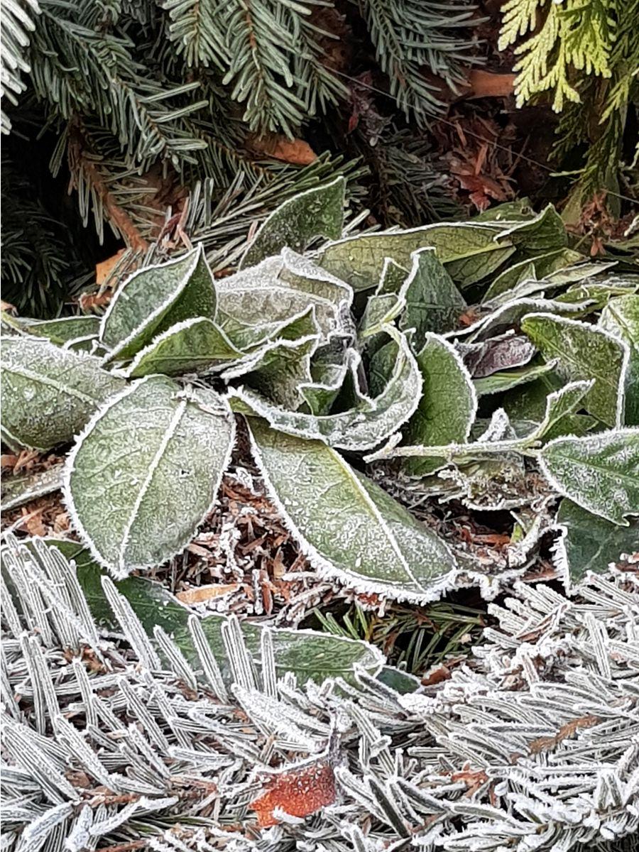 gefrorene Grünabfälle entsorgen in der Region