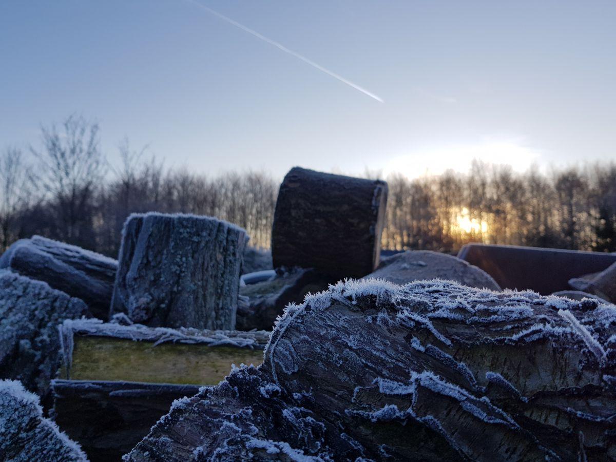 frostige Stämme im Sonnenaufgang